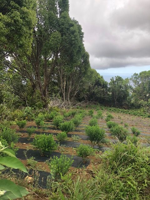 Reunion Plant Field