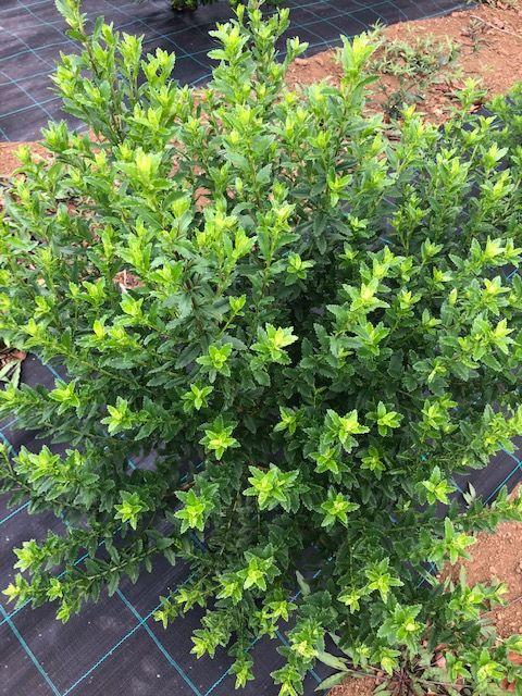 Reunion Plant 2