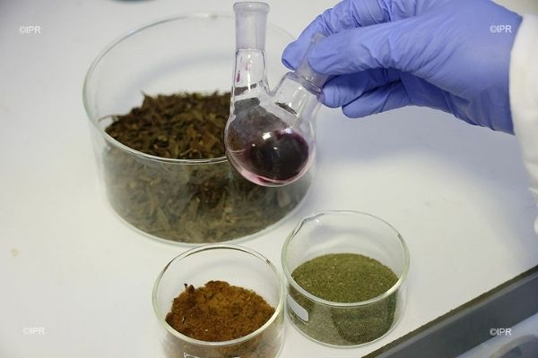 TORSKAL's Gold Nanoparticles synthesized from green chemistry, lyophilised plant extract, plant powder and dried plant leaves